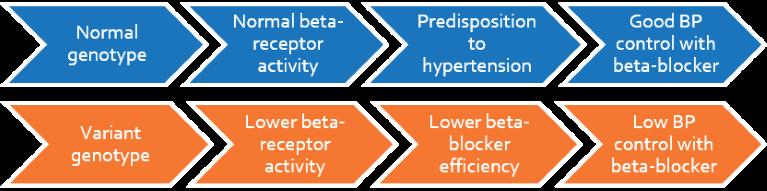 beta-blockers_flow